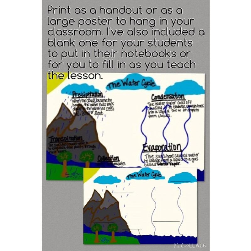 Cycle Poster, Student Handout & Quiz (for 3rd, 4th, & 5th graders)